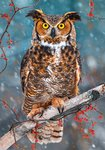 Great Horned Owl - Puzzel (500)