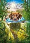 Swimming Dog - Puzzel (500)