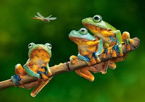 The Frog Compagnions - Puzzel (500)