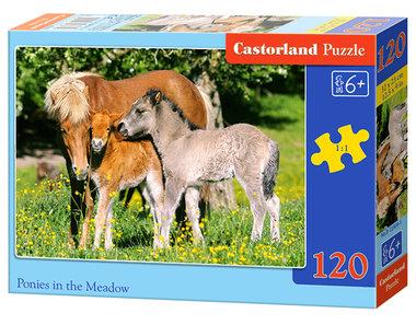 Pony's in het Veld (120)