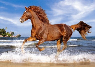 Horse on the Beach - Puzzel (500)